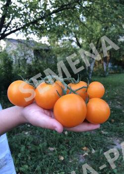 Семена Томат Черри Златояр F1 5 шт