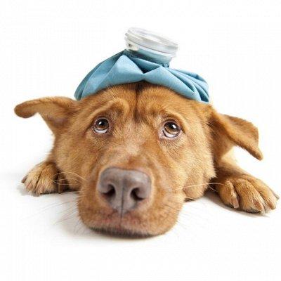 🐶 Догхаус. Большая закупка зоотоваров — Ветеринарные препараты