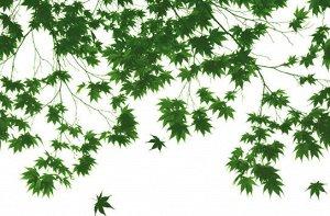 Фотообои Осенние листья