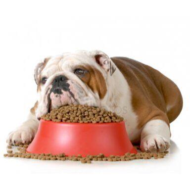 🐶 Догхаус. Большая закупка зоотоваров — Диета для собак