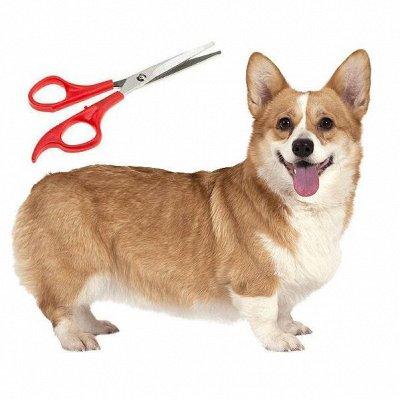🐶 Догхаус. Большая закупка зоотоваров — Груминг и пеленки для собак