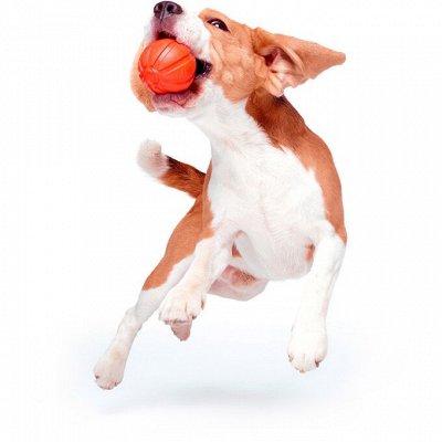 🐶 Догхаус. Большая закупка зоотоваров — Игрушки для собак