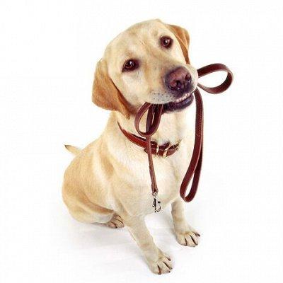 🐶 Догхаус. Большая закупка зоотоваров — Амуниция и вольеры для собак