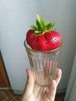 Цунаки Клубника Цунаки среднего срока созревания, очень крупная ягода, может расти на одном мести до 7 лет