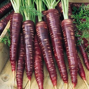 Морковь Негритянка