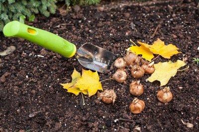 Семена агрофирмы Марс! Одежда и аксессуары. ДОБАВИЛИ НОВИНКИ — Семена на ОСЕНЬ