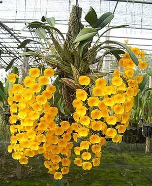 Рассада орхидей поштучно. Осень 2021