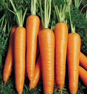 Вита Лонга 1000шт серия Johnsons А морковь
