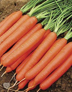 Нантская 5 суперсочная 2гр А морковь