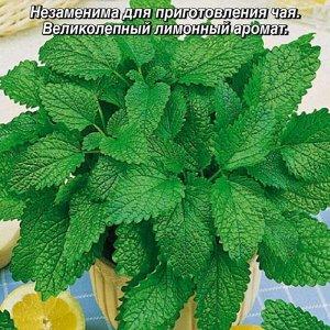 Мелисса Лимонный аромат лекарств. 0,1г  А