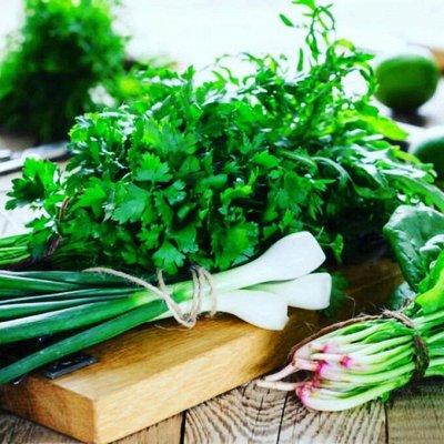Распродажа посадочного на осень! Луковицы, семена, удобрения — Укроп, петрушка, лук