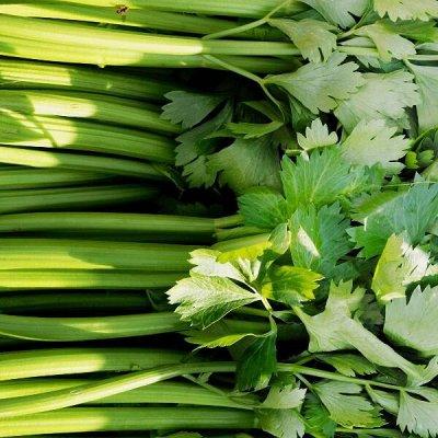 Распродажа посадочного на осень! Луковицы, семена, удобрения — Салат, сельдерей