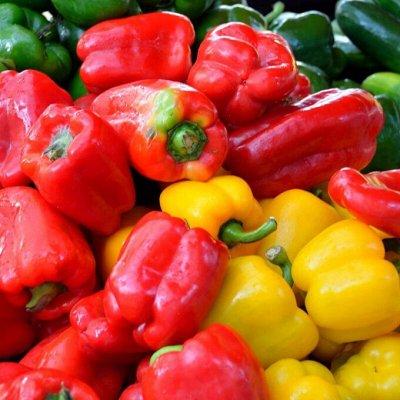 Распродажа посадочного на осень! Луковицы, семена, удобрения — Перец, кукуруза