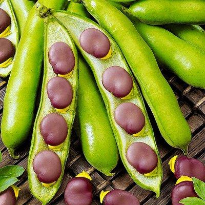 Распродажа посадочного на осень! Луковицы, семена, удобрения — Бобы, горох