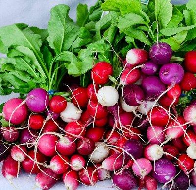 Распродажа посадочного на осень! Луковицы, семена, удобрения — Редис, репа, редька