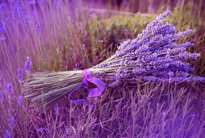 Ампельные цветы - целые шапки цветов в подвесных кашпо — Зелень