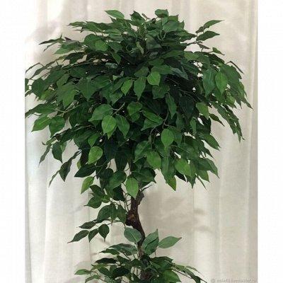 Искусственные растения. ЕвроКачество! Гипоаллергенны — Деревья и кусты искусственные