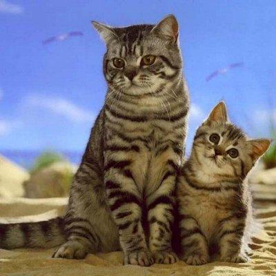 Корма для кошек и котят. + Витамины и био-добавки