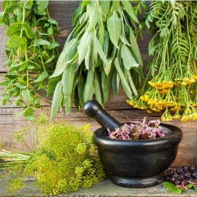 Цветочные Луковицы на Осень (Голландия) 🌺 Урожай на Окне — Пряные травы