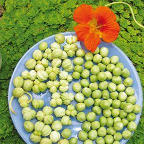 Цветочные Луковицы на Осень (Голландия) 🌺 Урожай на Окне — 2 в 1 = Двойная польза для вашей семьи