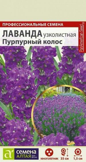 Лаванда Пурпурный колос узколистная/Сем Алт/цп 5 шт. многолетник