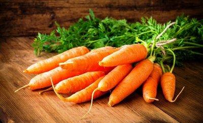 Семена Алтая — Морковь