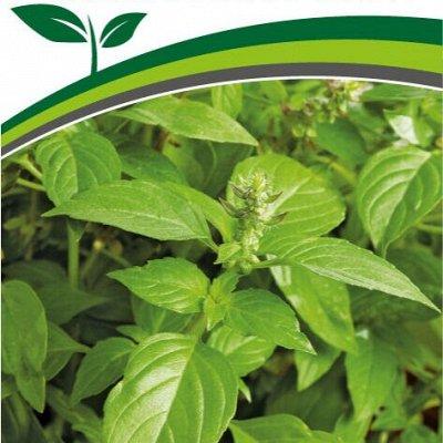 Семена Партнёр. Проверенные временем — Зелень. Пряновкусовые и редкие растения