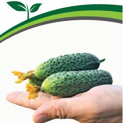 Семена Партнёр. Проверенные временем — Огурцы партенокарпические для защищённого грунта