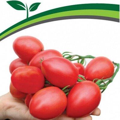 Семена Партнёр. Проверенные временем — Томаты для открытого грунта