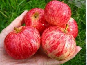 Яблоня Коричное полосатая