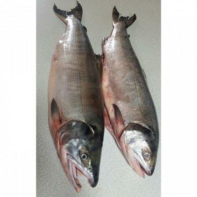 Рыбные деликатесы(Местное производство) — Кета тушка, стейки, фарш (раздача морозильная камера!)
