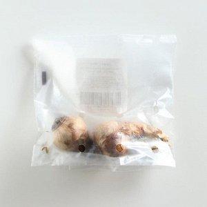 Нарцисс махровый Реплит/REPLETE, р-р 12/14, 2шт, Эконом