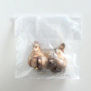 Нарцисс крупнокорончатый Хромаколор/CHROMACOLOR, р-р 14/16, 2шт, Эконом