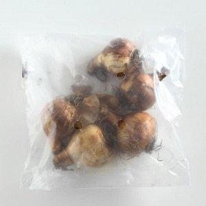 Нарцисс махровый Рип Ван Винкль/RIP VAN WINKLE, р-р 10/12, 5шт, Эконом