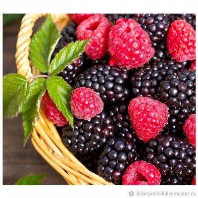 Саженцы плодово-ягодные и декорат! Огромный выбор. Весна 2022 — Малина, ежевика