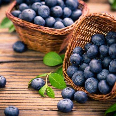 Саженцы плодово-ягодные и декорат! Огромный выбор. Весна 2022 — Голубика
