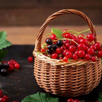 Саженцы плодово-ягодные и декорат! Огромный выбор. Весна 2022 — Смородина