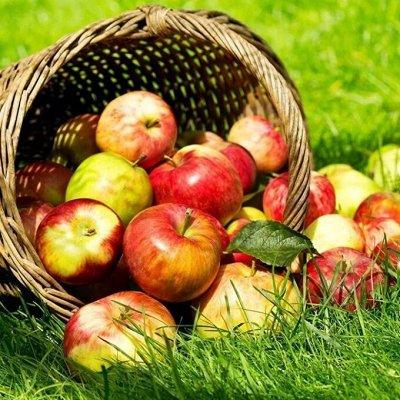 Саженцы плодово-ягодные и декорат! Огромный выбор. Весна 2022 — Яблони