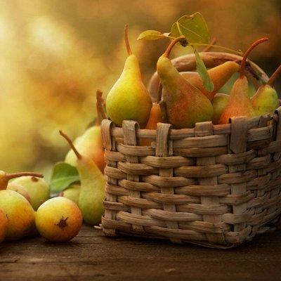 Саженцы плодово-ягодные и декорат! Огромный выбор. Весна 2022 — Груши