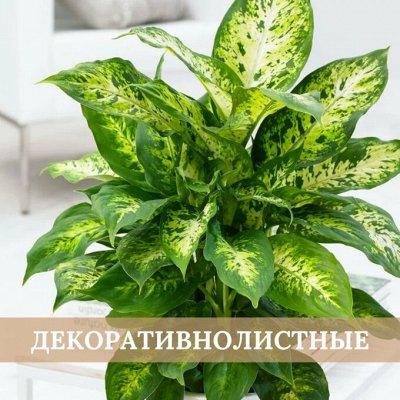 Хищный Sale! Огромный выбор комнатных растений — Декоративнолистные растения