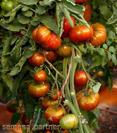 Семена от Агрофирмы Партнер. Новые поступления