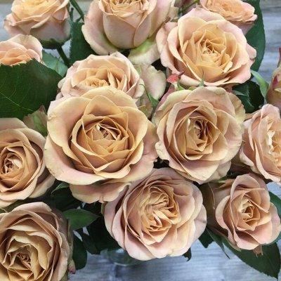 СИБИРСКАЯ роза в НОВОМ формате! Предзаказ! 40% — Новинки 21-22 года