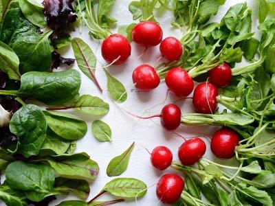 Самый лучший сад! Семена Сады России! Вкуснейшие томаты — Редис, фасоль, зелень