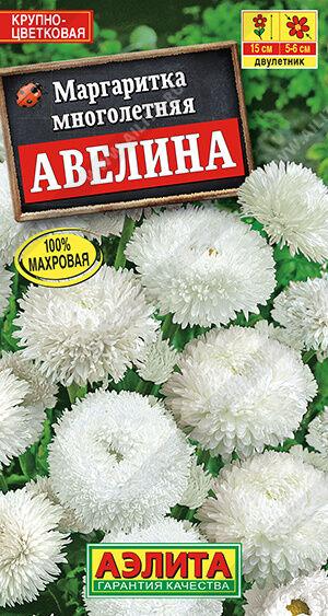 Маргаритка Авелина крупноцветковая