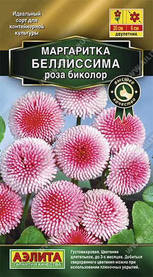 Маргаритка Беллиссима роза биколор