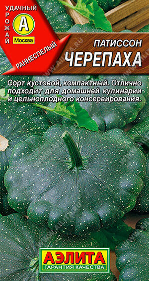 Патиссон Черепаха