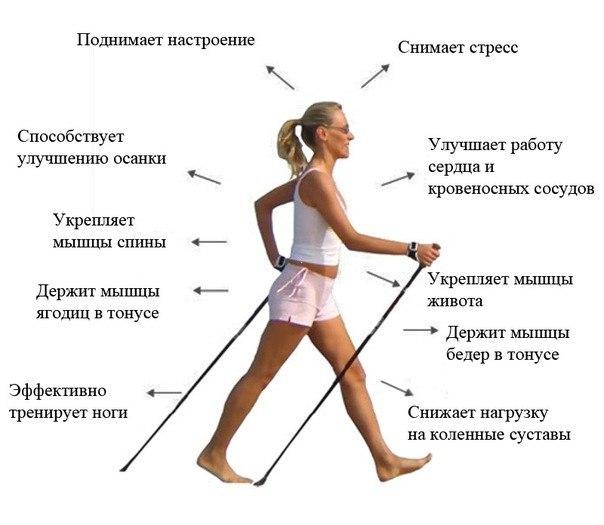 """Палки для скандинавской ходьбы """"Пробковые ручки"""""""