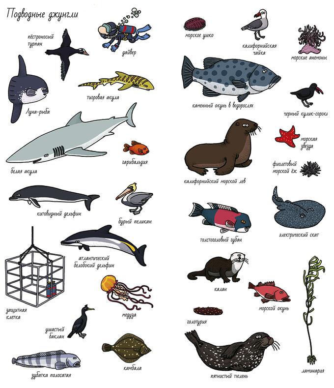 название морских животных с картинками они направлены