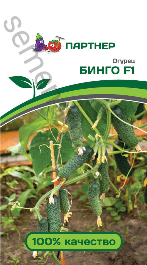 Семена Огурец партенокарпический Бинго F1 5 шт.