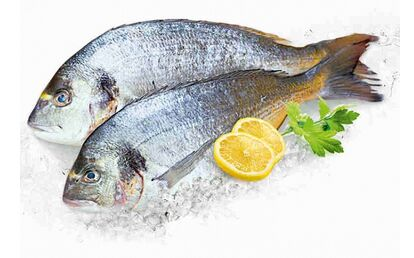 Рыба Дорадо сг не потр.